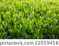 หญ้าอ่อน,หมวดธุรกิจ,อุตสาหกรรม 22059458