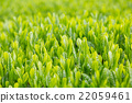 หญ้าอ่อน,หมวดธุรกิจ,อุตสาหกรรม 22059461