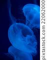 海蜇 水母 美杜莎 22062000