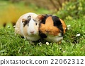 Guinea pig attachment 22062312