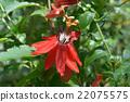 바늘꽃 꽃시계 22075575