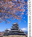 Matsumoto castle in spring season, Nagano, Japan 22076547