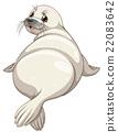 seal, cute, vector 22083642