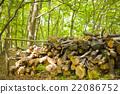 숲에서 장작 보관소 22086752