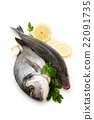 Fresh Fish. 22091735