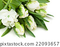 White tulips. 22093657