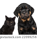 Kitten and puppy series isolated on white 22099256