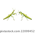 vector two praying mantis are fighting 22099452