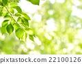 翠绿 鲜绿 树叶 22100126