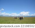 african, elephant, grass 22106502