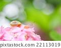 bloom, blossom, blossoms 22113019