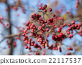 rowan, berry, red 22117537