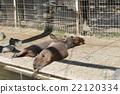 水豚 松鼠猴 动物园 22120334