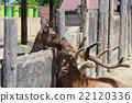 鹿 动物园 动物 22120336