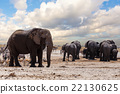 full waterhole with Elephants 22130625