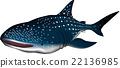 고래 상어 일러스트 벡터 22136985