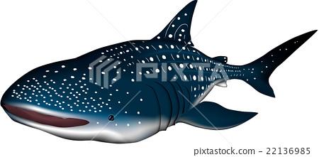 Whale shark illustration vector 22136985