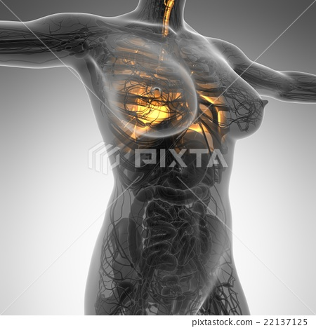 Science Anatomy Of Woman Body With Glow Lungs Stock Illustration
