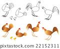 chicken, chickens, set 22152311