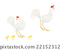 chicken, chickens, young bird 22152312
