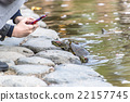 fed turtle 22157745
