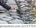 fed turtle 22157754