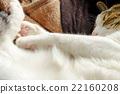 cat, pussy, nap 22160208