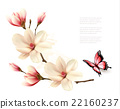 Beautiful white magnolia branch with a butterfly.  22160237