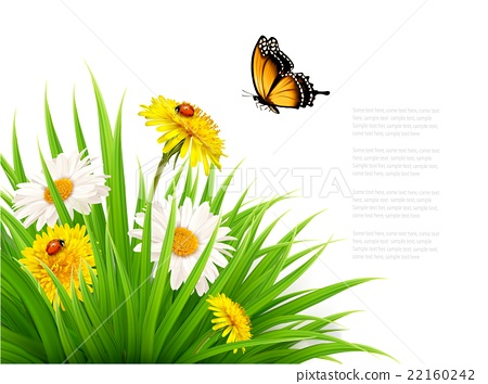 Nature summer background with daisy flower  22160242