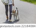 animal animals person 22164084