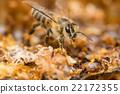 蜜蜂 複眼 蟲子 22172355