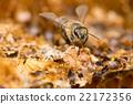 複眼 蜜蜂 蟲子 22172356