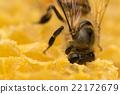 蜜蜂 大頭照 蟲子 22172679
