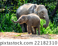 Mother elephant with baby 22182310