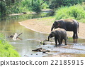 Elephant splashing with water while taking a bath 22185915
