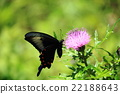 bug, insect, butterfly 22188643