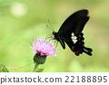 蟲子 漏洞 昆蟲 22188895