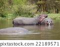 父母和小孩 親子 動物 22189571