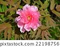 花朵 花卉 花 22198756