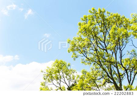 봄 이미지 신록과 푸른 하늘 22202883