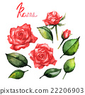 玫瑰 玫瑰花 花朵 22206903