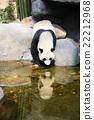 Panda near water 22212968