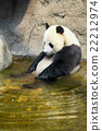 Giant panda sitting in water 22212974