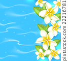 flower, blue, tropical 22216781