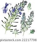 herbal, flower, rosemary 22217798