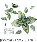 herbal, leaf, oregano 22217812