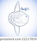 Graphic vector sunfish 22217839