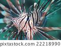 얼굴, 물고기, 푸른 22218990
