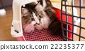 Cat 22235377