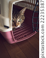 Cat 22235387